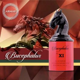 bucephalus xi